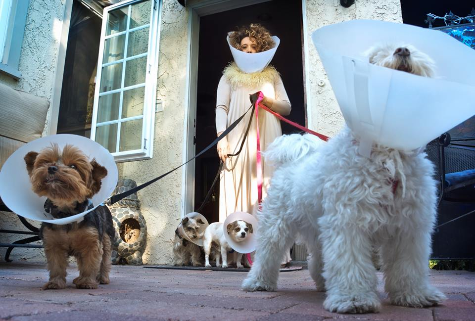 Eileen Galindo-Dog Cones